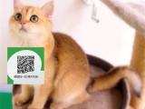 绵阳哪里有宠物店 绵阳哪里卖宠物猫便宜 绵阳蓝猫价格