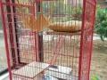 三层精品猫别墅 猫笼子 出售