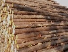 北京全市提供6米7米8米高壓線防護杉木桿出租出售服務