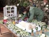 北京市寵物火化,寵物狗死亡處理