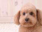 长征东路 十犬十美宠物生活馆