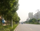 庐阳工业区荷塘路西框架一楼410平方厂房