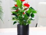 北京東城室內觀葉植物租賃