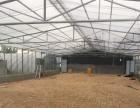 出租任城建设北路智能温室蔬菜大棚出租