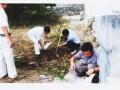 企石灭治白蚁所 寮步白蚁防治 大岭山灭治白蚁 免费检测