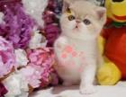 潍坊哪里有卖加菲猫的较便宜多少钱一只
