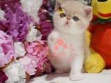 潍坊哪里有卖加菲猫的最便宜多少钱一只