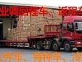 15年专业调车4-18米回程车返程车 嵊泗回程车调度中心