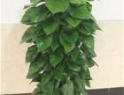 宁波南部商务区租植物,东部新城租植物,高新区租绿植