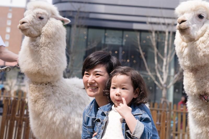 包租白羊驼商城展览与小孩合影拍照