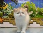 世界名宠专业家庭繁殖折耳英美短蓝猫布偶加菲波斯等