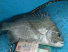 海南汇点海上渔乐钓鱼平台