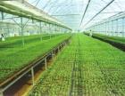 跑赢时代的加速器:智慧农业