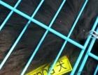 杭州诚信宠物托运专业办理宠物托运(汽运,空运,中铁快运)