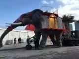 蕪湖專業機械大象出租 仿真大象租賃