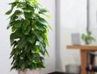 重庆专业植物租赁,办公绿化--卉涧园林