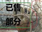 从上海崇明海域施工挖出的历史树根收藏多年未开刀转让