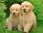 五一打折促銷 博美金毛犬哈士奇阿拉斯加犬拉布拉多簽協議保障