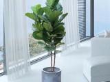 上海鲜花预定开业乔迁花篮植物绿植租赁园林绿化养护