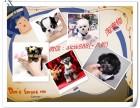 武汉本地区有约克夏 博美 比熊 柯基幼犬带健康证书 包健康
