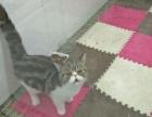 加菲猫2个月找爱它的主人