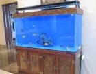 清洗鱼缸+鱼缸风水格局布置