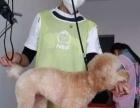 包头宠物美容师培训