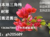 黄浦小区 公园 喷灌滴管自动化安装设计 盆景 黑松 罗汉松
