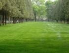 北京北京周边草坪施工优惠预订全城配送 及时送达