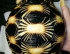 出售 黄喉龟 红退陆龟 豹纹龟 辐射龟