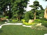 承接园林绿化工程,绿化升级改造工程