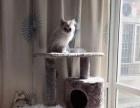 全新猫爬架!可以睡觉玩耍还有磨板