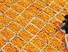 秭归脐橙代收一件代发电商供应链
