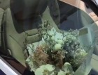 花艺培训 妇女节活动(花店创业 家居花艺 团体活动