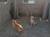 西城南禮士路提供寵物寄養單獨狗狗房間寄養帶單獨院子上門接送
