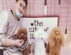 北京派多格宠物美容培训学校 专业指导
