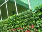 绿植租摆销售 植物墙 园林景观 仿真植物 全市低价