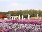 三月赏花季松湖生态园农家乐邀您共赏百亩花海