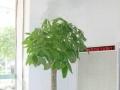 深圳南山办公室绿植租赁,室内绿植租摆,园林绿化养护