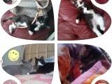Aunt-s Kiss家庭猫咪寄养日常所有服务