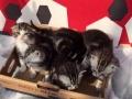 银虎斑,蓝猫,波斯猫…