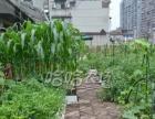 九耀哈哈农场-屋顶菜园种植服务