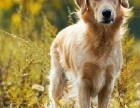 看狗加微信/全国连锁宠物狗狗店/犬舍品种齐全送货上门/可托运