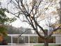 东营区绿洲国际花园 3室2厅133平米 简单装修 面议