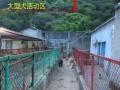 温州犬舍宠物寄养