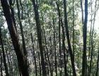 云南省昆明市东川区600亩林地转让