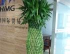 广州绿植租摆盆栽出租,花草出售优惠价,广州禅博园艺