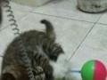 有需要领养猫咪的吗
