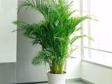 办公室植物租赁260元起租