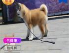 哪里有卖秋田犬秋田犬多少钱 支持全国发货